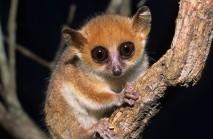 primates2012-3